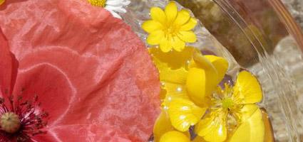 Flower Essence Consultation2