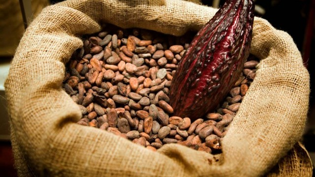 cacao-essential-oil-one-heart